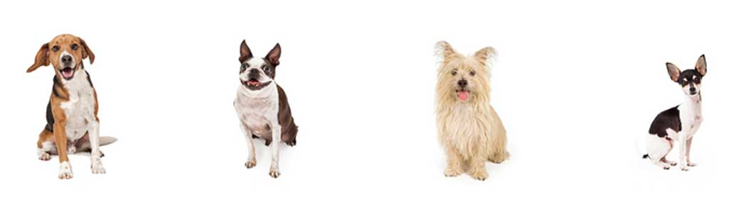 How To Treat Fleas In Smaller Dogs?