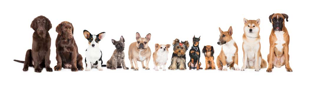 How To Get Rid Of Fleas In Dogs?