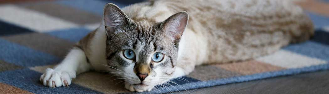 The Best Deworming Treatments for Cats