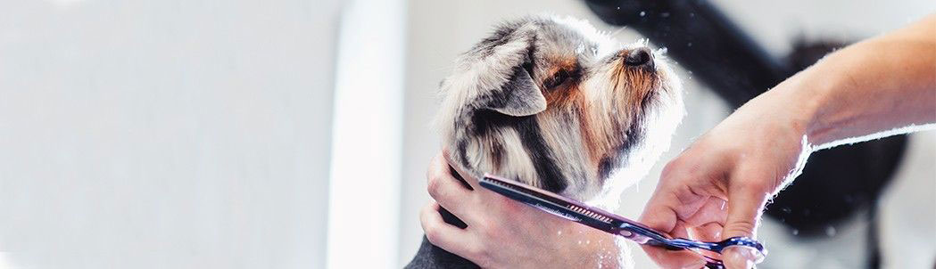 Dog Grooming Made Easy for Everyday Pet Owners