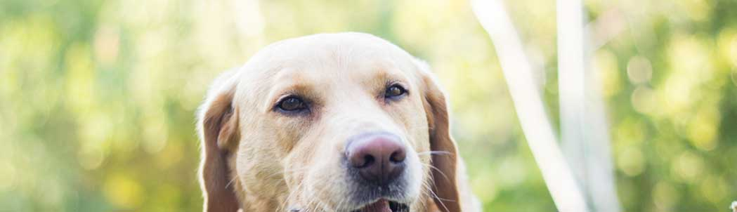 What Is The Best Frontline for Dogs